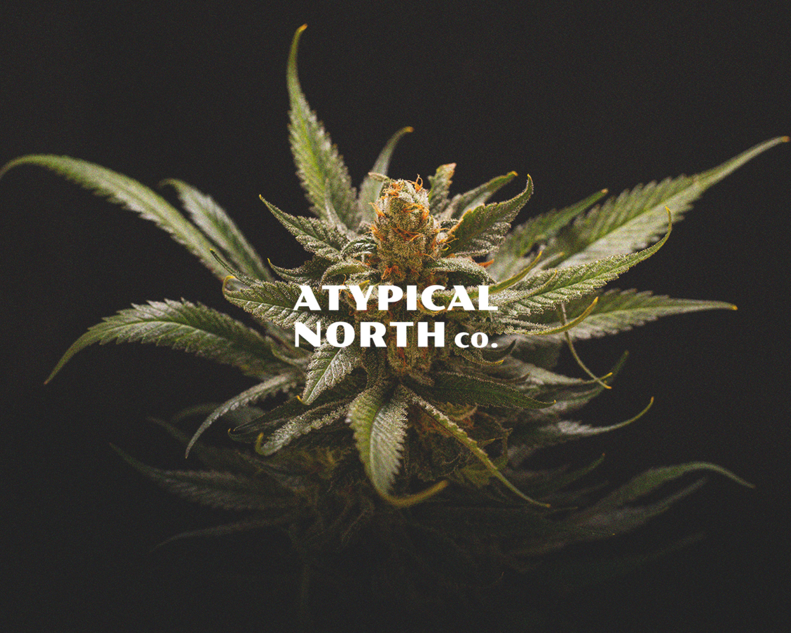 Atypical_north